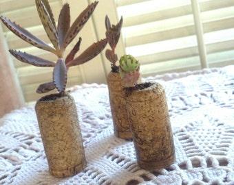 Set of 3 Wine Cork Succulent Planters with live Succulents