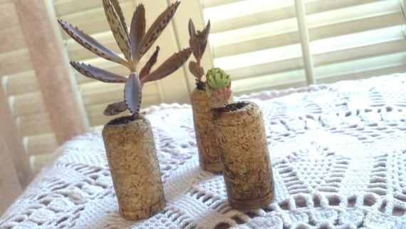 Set of 3 Wine Cork Succulent Planters with live Succulents