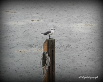 Seagull in the rain / Photograph / Free US Shipping