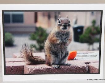 photo card, chipmunk, photograph card, wildlife