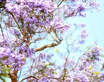 Summer Day Dreams - Jacaranda Tree - Nature Photo Print - Size 8x10, 5x7, or 4x6