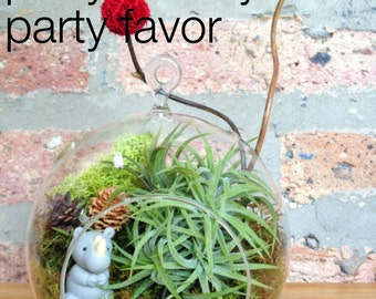Childrens Wildlife Air Plant Terrarium - A Perfect Birthday Gift RHINO, KANGAROO or PENGUIN