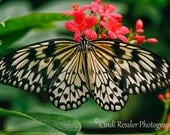 Rice Paper Butterfly, Fine Art Photography, Butterfly Photography, Nature Photography