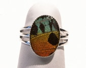 ButterflyWing Bling hand made butterfly wing jewelry 26102-Sm Adjustable Ring-Silver-14x10mm-Sunset Moth- Butterfly Jewelry - Free Shipping