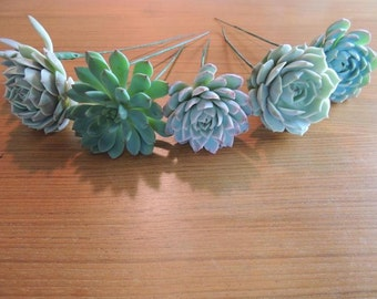 14 Wired Succulents for DIY bouquet