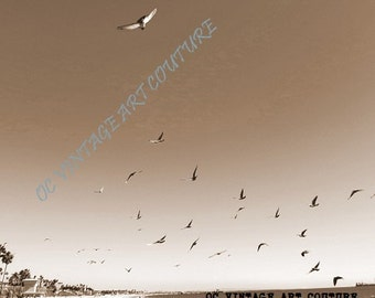 99 CENTS each Sepia Beach Birds California taken in Orange Digital Picture Photo Wallpaper Image Download