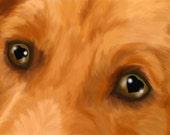 Title: Eyes of Love ( golden Retriever) by artist print 13x19 dog breed print