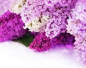 1/2oz Natural Lilac Perfume Oil, Fragrance Oil, Lilac Fragrance Oil, Lilac Perfume Oil, Lilac Scent, Lotions and Potions