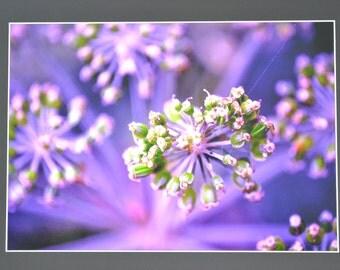 "Mounted Original Photograph - 20x18"" - Hedgerow Beauty"