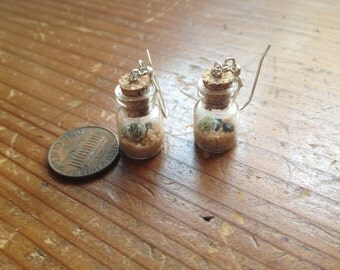 Earrariums, living terrarium earrings!