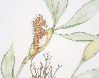 Short-headed Seahorse Original Pen and Ink Drawing