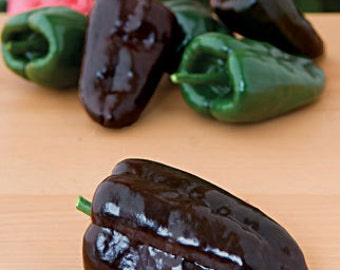 Heirloom Poblano Ancho Chile Pepper, Sundried and Grown On Our Farm, 20 Seeds