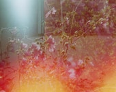 Floral Haze - 12 x 8 Fine Art Photography Print from 35mm film - icefloestore