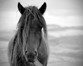 Black and white horse photo, horse photography, equine art, ranch decor, oversize art