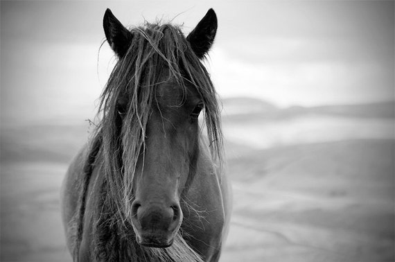 Black and white horse photo horse photography equine art