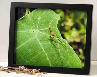 spider photograph, animal photography, nature photography, 3 sizes available