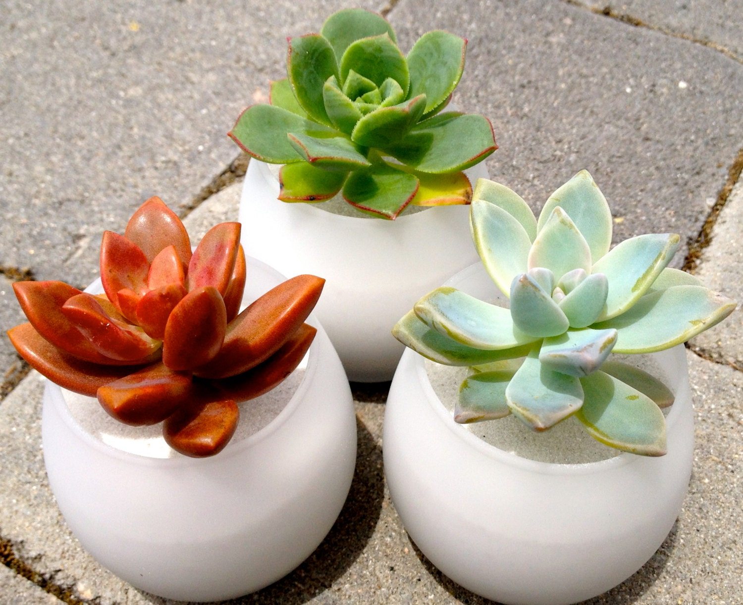 24 Succulent Wedding Favors In Modern Globe Shape Wedding