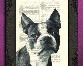 boston terrier print black and white boston terrier portrait