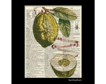 Vintage Dictionary Art Print - Lime Citrus Fruit - Dictionary Page - Book Art Print  - Home Decor No. P70