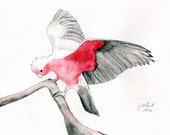 Watercolour bird painting, galah landing on a branch, A4 size, Australian, original, native bird, pink grey, sfa small format art - Jillsgallery