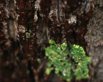 Tree Bark Shots
