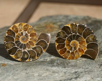 Cabinet Knobs - Dark Caramel Ammonite  Set of 2, Stone Cabinet Knobs, Kitchen Knobs and Pulls