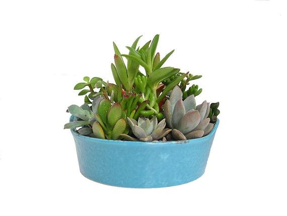 "Succulent Mix in Turquoise Ceramic Pot Dish Garden Centerpiece for Gifts Favors Modern Minimalist Planter 7.5"" Diameter"