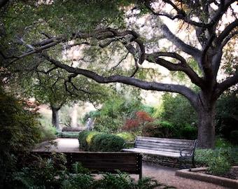 Landscape Photography - Meander - 8x10 Fine Art Photograph - Tree, Leaves, Park Bench, Fine Art Photograph - Affordable Home Decor, Path