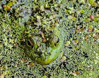 Frog Image, Frog Photo, Nature Photographs, Nature Image, 8 x 10