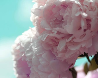 Photo Print - Pink Peonies on Turquoise Sky