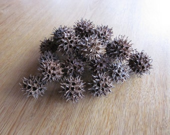 Sweet Gum Balls 150 for Crafts and Wedding Decorations