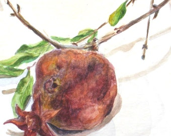 Red Dry Pomegranate Still Life Watercolor  Painting  Print - Square -Under 20 -Nature - Organic