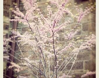 "Cherry Blossoms - New York City - photograph - fine art photograph - vintage style - New York, NY - 10"" x 10"""