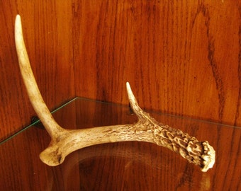 Make an Offer- Found Deer Antler