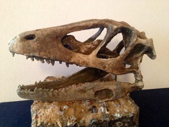 Velociraptor dinosaur skull 3d printed replica
