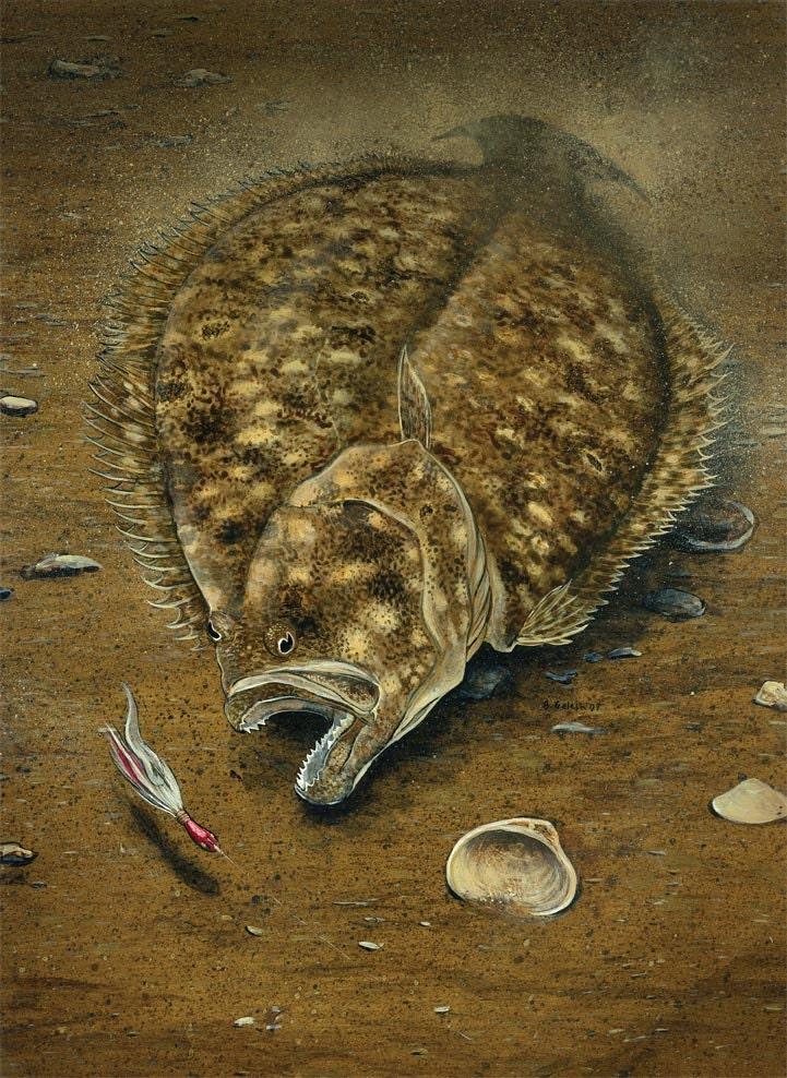 Bucktail flounder summer flounder 16x20 art print by for Fluke fishing nj