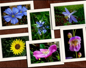 6 Wildflower Photo Note Cards - Flower Note Cards - 5x7 Wildflower Cards - Blank Wildflower Note Cards - Wildflower Greeting Cards (GP63)