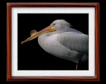 Pelican Print - 8x10 or 11x14 Pelican Photograph - Bird Photograph - Bird Print - Pelican Art (P7)