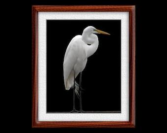 Great Egret Print - 8x10 Great Egret Photograph - Bird Photograph - Bird Print (P13)