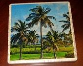 Palm Ceramic Tile