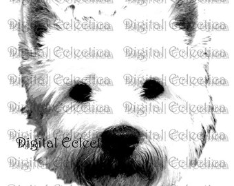 West Highland White Terrier Dog. Westie PNG. Animal PNG. Westie Prints. Westie Images Pictures Westie Art Clipart. Westie Drawings.No. 0015.
