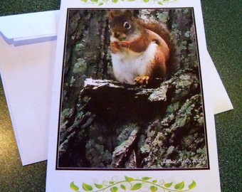 Hungry squirrel note card