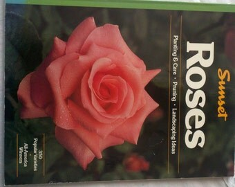 Sunset Roses Planting and Care Pruning Landscaping Ideas