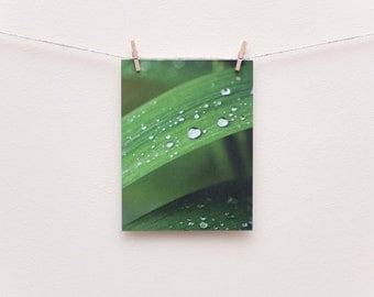 Dewdrops on leaves eco-friendly photo postcard