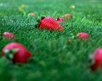 Strawberry Fields Forever-Strawberry Photograph, 10x20