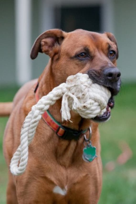 Ava tug and toss cotton rope dog toy in white