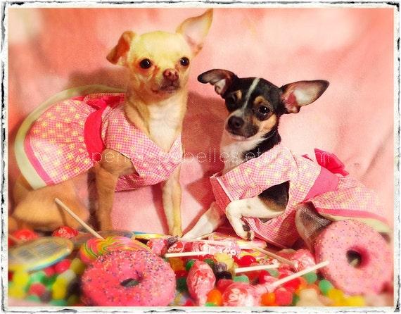 Chihuahua Birthday Card Sweet Wishes Birthday Card Candy and – Chihuahua Birthday Cards