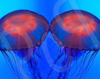 Glowing Jellyfish Mirror Image Photograph Print