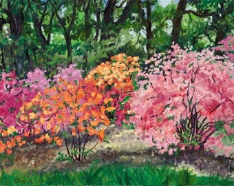 Azaleas, Canvas Print of Original Plein Air Oil Landscape Painting