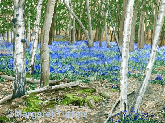 The Bluebell Glade Print, mounted and signed